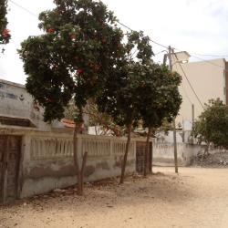 En face de le mosquée, devanture arborée